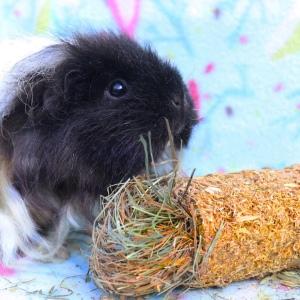 Babooshka loves the Flower Cracker.