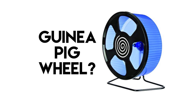 Squidgypigs Piggin Good Guinea Pig Product Reviews