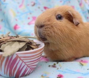Piggie Parcels Review