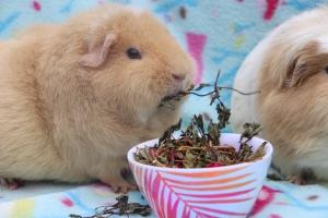 Piggie Parcel's Review