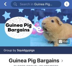 Guinea Pig Bargains